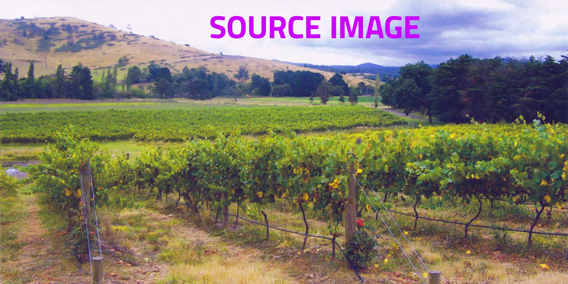 Photorealist painting - Vineyard - Source image